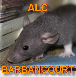 barbancourt